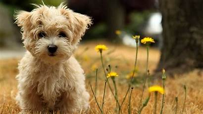 Dog Wallpapers Flower Cave