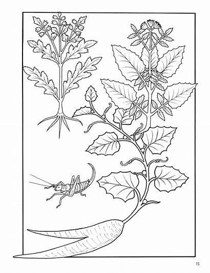 Coloring Herbs Plants Medicinal Elegant Zoom