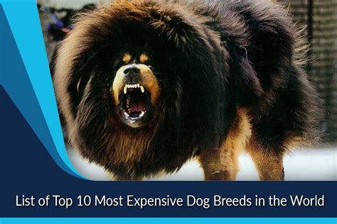 Most Expensive Dog Breeds In The World Top Ten List