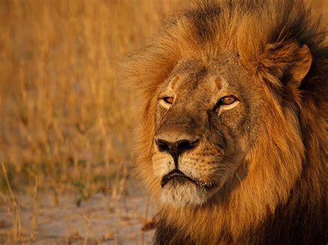 cecil  lion patient  minnesota dentist didnt talk