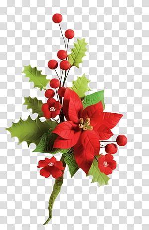 poinsettia christmas red poinsettia flower transparent
