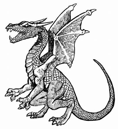 Dragon Clipart Komodo Head Medieval Clipground