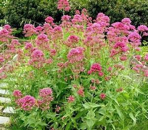 les 25 meilleures idees de la categorie jardin sec sur With ordinary idee amenagement jardin paysager 15 paysage decors creations paysage decors