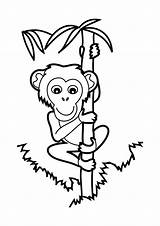 Monkey Coloring Climbing Bamboo Pages Tree Rock Printable Climb Animals Panda Coloringonly Chimpanzee Categories Getcolorings Getdrawings sketch template