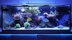 Großes Aquarium Kaufen : das 770 liter meerwasser aquarium von matthias sch tt ~ Frokenaadalensverden.com Haus und Dekorationen
