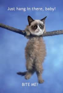 hang in there cat just hang in there grumpy flickr photo