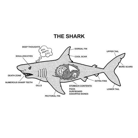 shark anatomy diagram poster 19x13 walmart