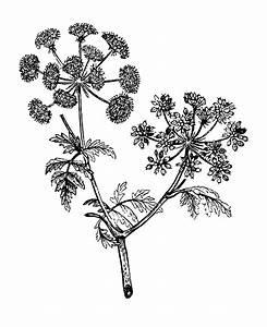 Floral illustrations, Plum tree and Vintage floral on ...