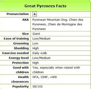 pet paradise great pyrenees information