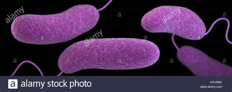 Vibrio Parahaemolyticus Bacteria, 3d Model Stock Photo. Secondary Bone Cancer Signs. Dance Studio Signs. Worst Case Signs. Sad Cry Signs. 7 December Signs. Cover Page High School Signs. Language Asl Signs. Dark Side Signs Of Stroke