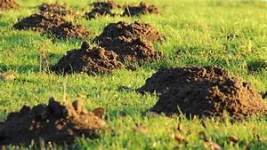 Maulwurf Im Garten Loswerden : so werden sie den maulwurf im garten los ~ Frokenaadalensverden.com Haus und Dekorationen