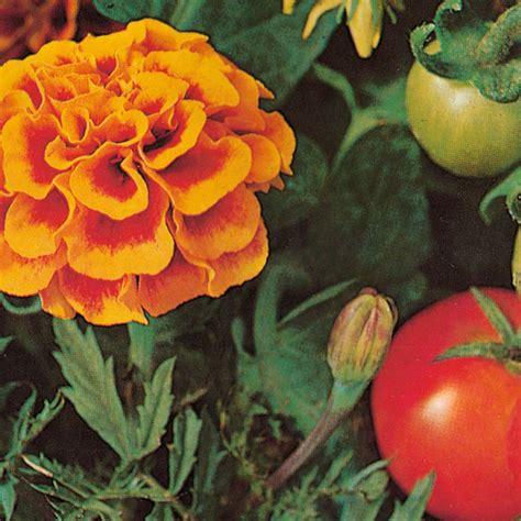 cuisine inde légumes et fleurs les bonnes associations au potager