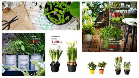 Ikea Angebote Der Woche G 252 Nstige Fr 252 Hlingspflanzen