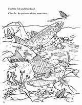 Coloring Freshwater Ecosystem Template sketch template