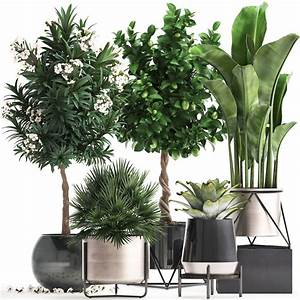 3d, Model, Collection, Of, Ornamental, Plants