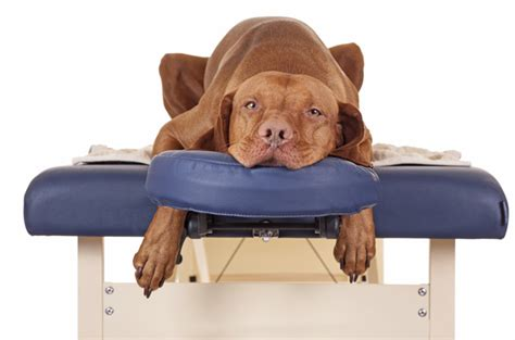 How To Master The Art Of Dog Massage