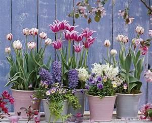 Planter Des Bulbes : fleurs bulbes plantez les maintenant contemplez les ~ Dallasstarsshop.com Idées de Décoration