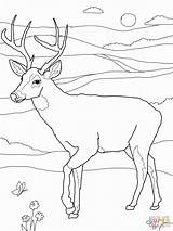 Coloring Hunting Deer Sheets Bow Printable Popular Library Clipart Coloringhome sketch template