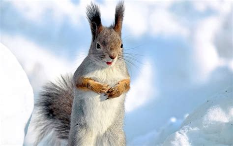 winter animal wallpapers high resolution animals