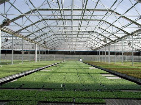 plastic greenhouses commercial flexibility greenhouses