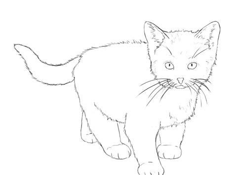 draw  kitten  cat step  step slim image