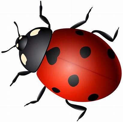 Ladybug Transparent Clipart Beetle Ladybird Clip Decorative