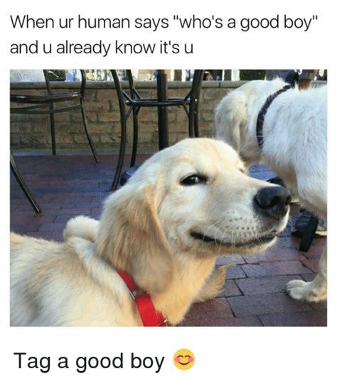 Good Boy Memes - 25 best memes about good boy good boy memes