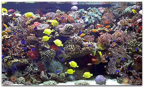 aquarium eau de mer tours 28 images aquarium r 233 cifal eau de mer reef tank 280 l 75 g 1