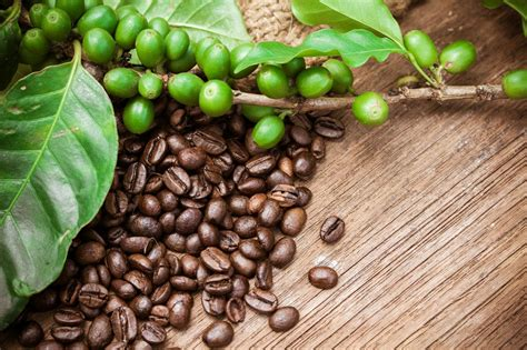 Limini coffee this is a wholesale coffee supplier and roaster based in west yorkshire that specializes in wholesale coffee beans, barista training & commercial espresso machines. Nestle Clamps Down on Coffee Bean Suppliers Following ...