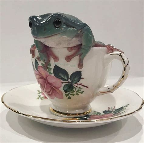 is that a frog in my cup in 2020 frogs frog
