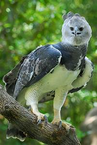 Mexico Harpy Eagle Experience Traveling In Mexico