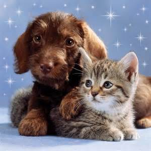 Cute Kitten and Puppy | Lily's board | Pinterest | Cute ...