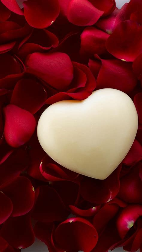 wallpaper love heart rose petals  love