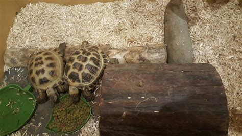 2 Tortoises With Full Set Up For Sale  Salford, Greater