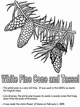 Pine Coloring Cone Tree Maine Clipart Tassel Kidzone Usa Trees Geography Ws Library Pine2 sketch template