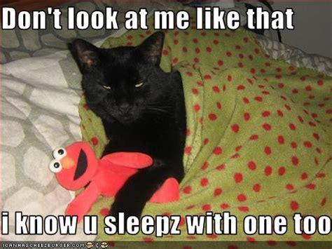 funny cat pics  captions funny images  jokes