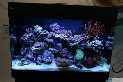 sea max 250 66 gallon aquarium
