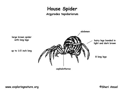 Spider Egg Diagram by Spider House
