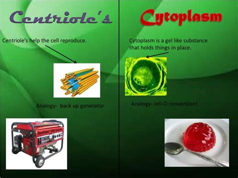 eukaryote cell analogy hotel powerpoint