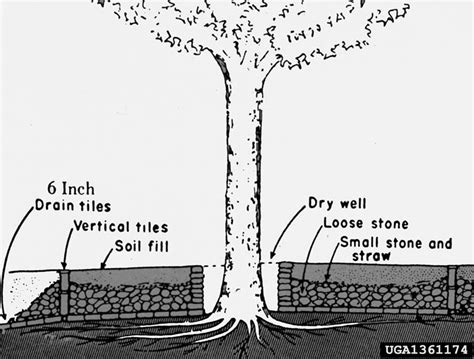 raised bed around tree do i need to protect the trunk