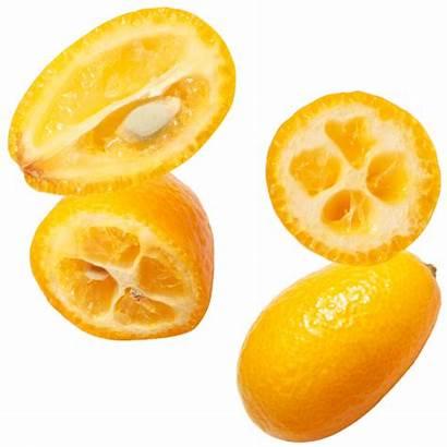 Citrus Fruit Kumquats