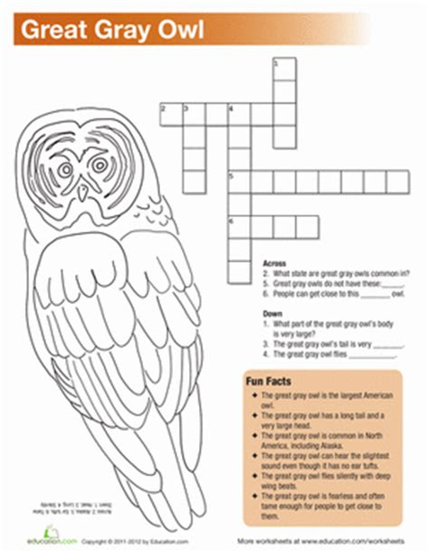 great gray owl facts worksheet education