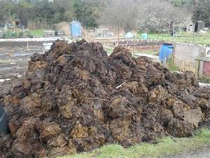 Using Organic Manure on your plot   not just greenfingers