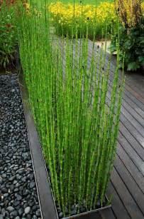 Jardin Bambou by Les 25 Meilleures Id 233 Es De La Cat 233 Gorie Bambou Sur