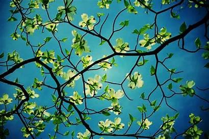 Desktop Unique Backgrounds Wallpapers Tree Cool Cave