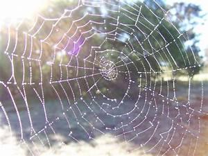 File:Dewy spider web.jpg - Wikimedia Commons