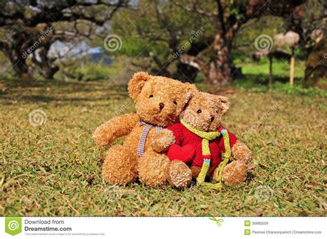 teddy garden two teddy bears sitting in the garden with love royalty free stock images image 36880509