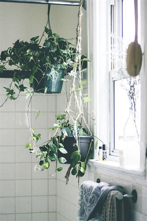 1000 ideas about bathroom plants on pinterest plants in