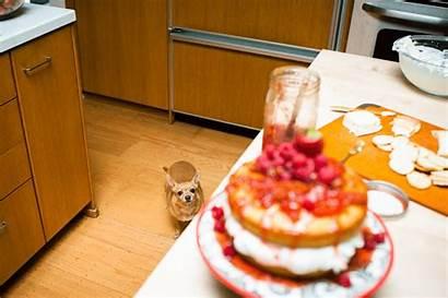Cake Victoria Sponge