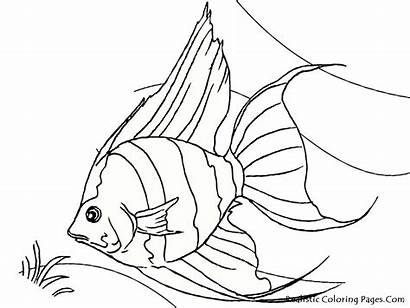 Fish Coloring Tropical Pages Realistic Angel Drawing